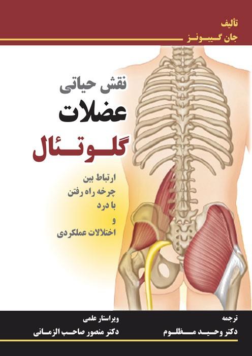 نقش حیاتی عضلات گلوتئال