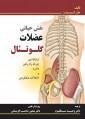 نقش حیاتی عضلات گلوتئال « ارتباط بین چرخه راه رفتن با درد و اختلالات عملکردی »