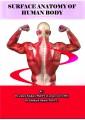 آناتومی سطحی بدن انسان
